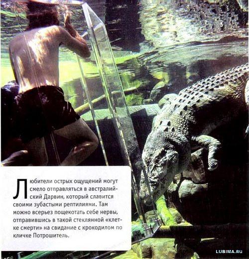 В аквариум с крокодилом
