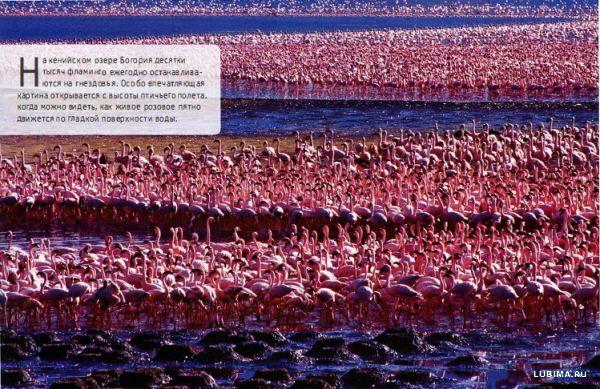 Розовый фламинго - мечта!