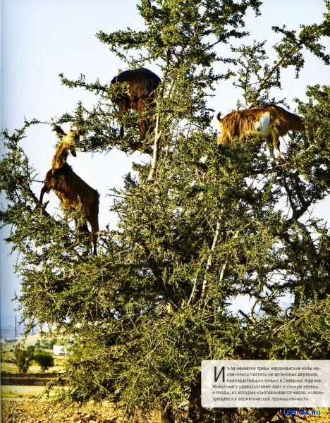 Животные научились лазить по деревьям